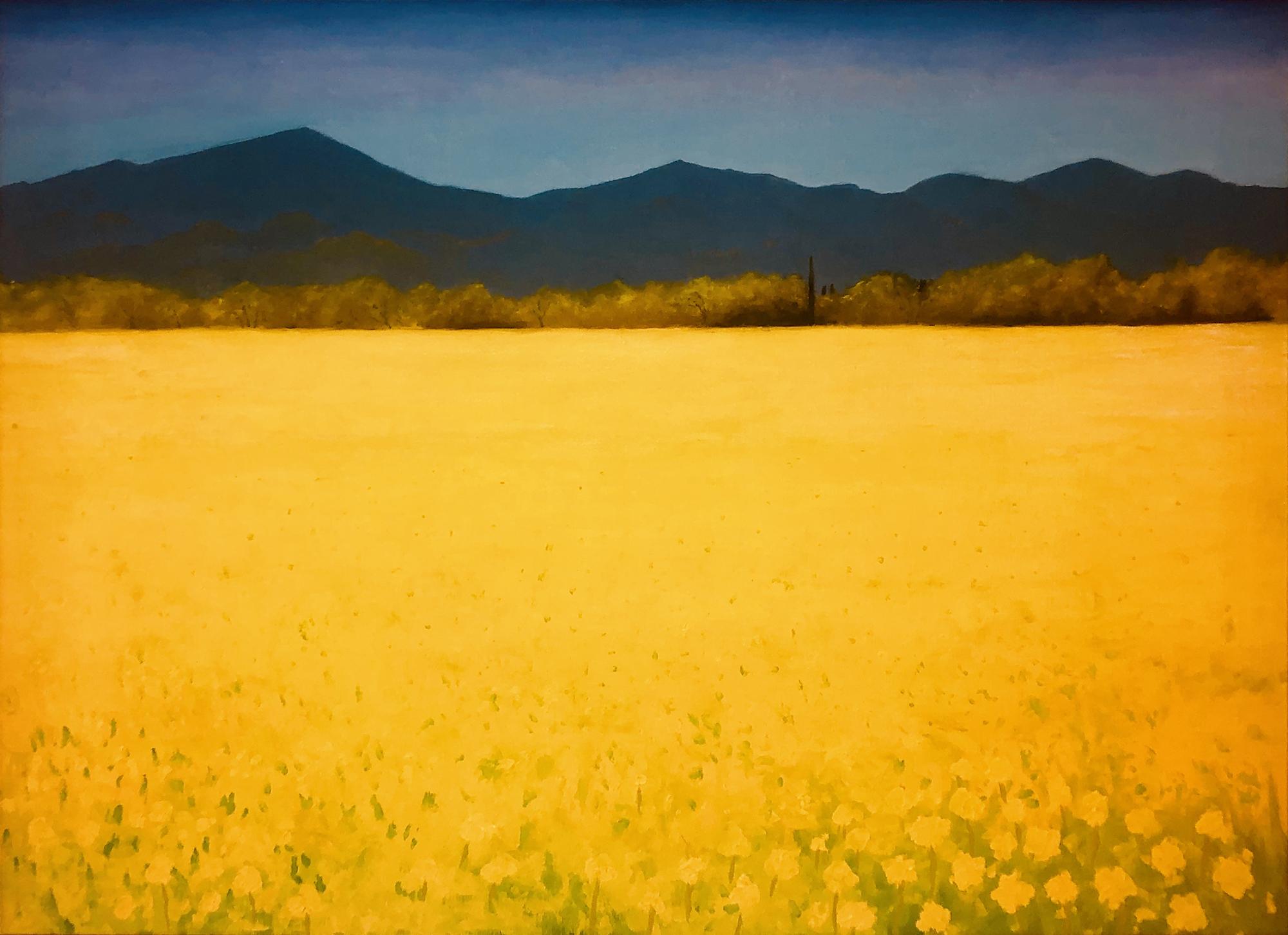 Mustard Field in Spring